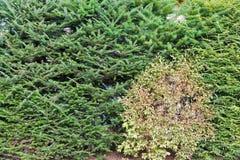 生长在庭院里的常青树集合 免版税库存照片