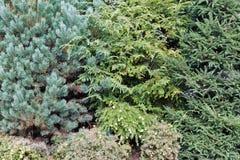 生长在庭院里的常青树集合 库存图片