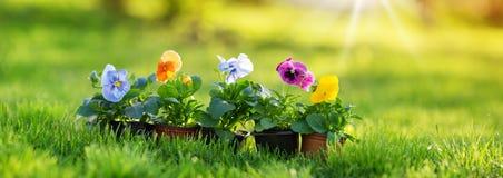生长在庭院里的花和菜幼木 免版税图库摄影