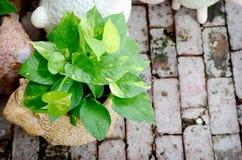 生长在庭院里的绿色植物 免版税库存图片