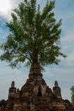 生长在微型bagan的寺庙外面的树 免版税图库摄影