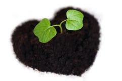 生长在心形的土壤外面的新芽 免版税库存照片