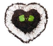 生长在心形的土壤外面的植物 库存图片