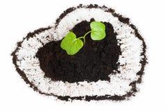 生长在心形的土壤外面的植物 库存照片