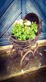 生长在摇篮车的植物 库存照片