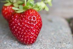 生长在摊铺机走道的草莓 库存图片