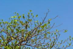 生长在明亮的天的树 库存图片