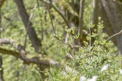 生长在明亮的德国森林的草本 免版税库存图片