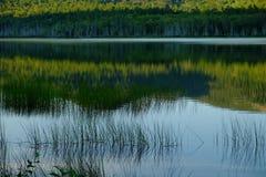 生长在有反射的一个镇静湖的草在日落 免版税库存照片