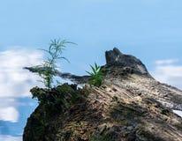 生长在有天空的一个池塘反射的注册的草一根微小的小树枝 库存照片