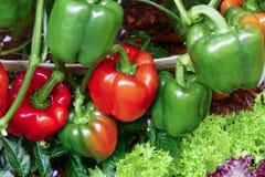 生长在有机农场的响铃甜椒 免版税库存照片