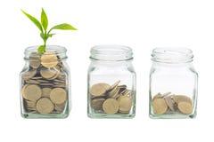 生长在有通过隔绝的硬币玻璃瓶子的植物在白色背景,节约金钱和投资财政概念,成长 图库摄影