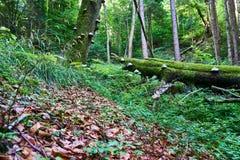 生长在木头的一棵树的真菌 库存照片