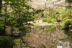 生长在木的佐仓桃红色花 免版税图库摄影