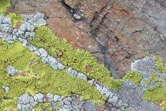 生长在树干的绿色地衣 免版税库存照片