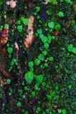 生长在树附近的植物 免版税图库摄影