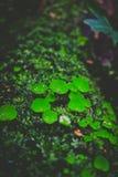 生长在树附近的植物 库存图片