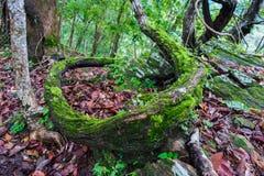 生长在树附近的植物 免版税库存照片