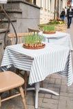 生长在桌上的一块陶瓷板材的草本在餐馆 免版税库存照片