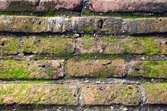 生长在棕色砖墙上的青苔 免版税库存照片