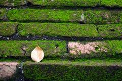 生长在棕色砖墙上的青苔 免版税库存图片