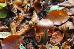 生长在森林里的狂放的蘑菇 库存图片