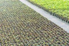 生长在植物托儿所的盆的幼木 免版税库存图片