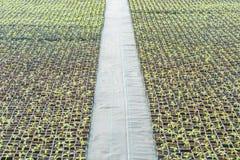 生长在植物托儿所的盆的幼木 免版税库存照片