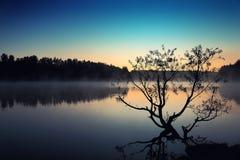 生长在池塘的偏僻的树在日出 免版税库存照片