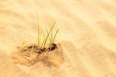 生长在沙漠的草叶 图库摄影