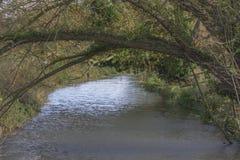 生长在河的树 免版税库存照片