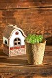 生长在泥炭沼罐和房子的盆的幼木 免版税图库摄影