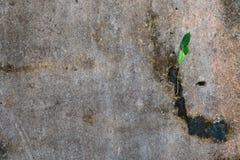 生长在混凝土墙的年幼植物 库存图片