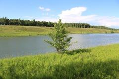 生长在湖的岸的一棵小树 库存照片