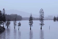 生长在湖的树全景在中国 免版税库存照片