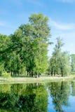 生长在湖附近的树在一个公园在春天 一些反弹严格晴朗那里不是的蓝色云彩日由于域重点充分的绿色横向小的移动工厂显示天空是麦子白色风 好的晴朗的天气 免版税库存照片