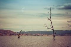 生长在湖水外面的贫瘠树 免版税库存照片