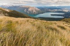 生长在湖Rotoiti上的倾斜的丛 免版税库存照片