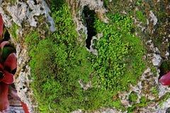 生长在潮湿热带气候,背景下的青苔 库存照片