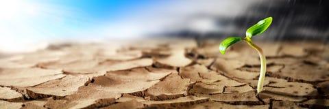 生长在热的干燥沙漠的植物 库存照片