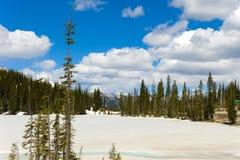 生长在熔化的雪的树在一个山顶在不列颠哥伦比亚省 免版税库存照片