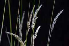 生长在狂放的植物 免版税库存图片
