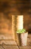 生长在生物可分解的泥炭沼的盆的幼木 免版税库存图片