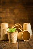 生长在生物可分解的泥炭沼罐的盆的幼木 选择聚焦 免版税库存照片