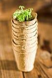 生长在生物可分解的泥炭沼罐的盆的幼木 免版税库存照片