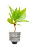 生长在电灯泡外面的绿色结构树 库存图片