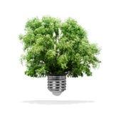 生长在电灯泡-绿色能量eco概念外面的树 免版税库存图片