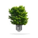 生长在电灯泡-绿色能量eco概念外面的树 图库摄影