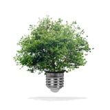 生长在电灯泡-绿色能量eco概念外面的树 库存图片