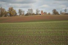 生长在的绿色麦子农业领域 库存图片